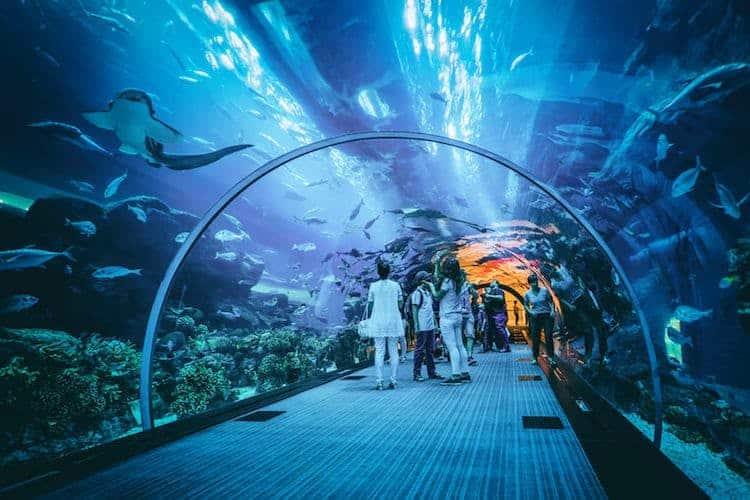 אקווריום דובאי וגן החיות התת ימי